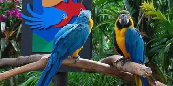 Feed our feathered friends at Jurong Bird Park