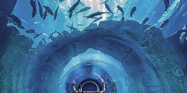 Witness exquisite marine life at Dubai Aquarium and Underwater Zoo