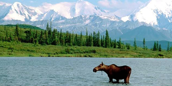 Get into the wild at Denali National Park