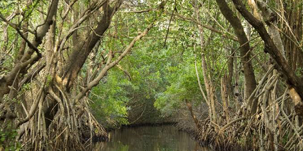 Experience wild treasure at Everglades National Park, Florida