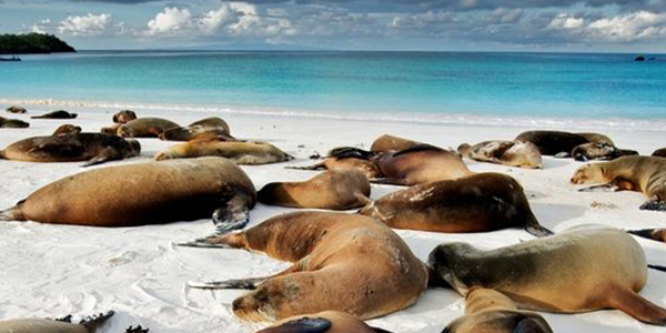 Cruise around the beautiful Galapagos Island, Ecuador
